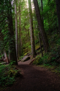 The trail leading to Toketee Falls located in Southern Oregon