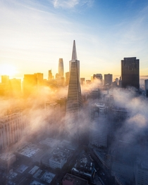 The Transamerica Pyramid the iconic peak of the San Francisco skyline emerging through a morning low fog  - IG BersonPhotos