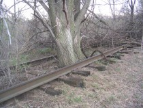 The tree that could stop a train Abandoned railroad bed in Inver Grove Heights MN