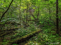 The Verdant Forests of Northern Ontario  Little Falls Trail Kakabeka Falls Ontario Canada