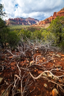 The vibrant colors of Sedona AZ  x