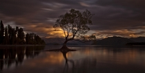 The Wanaka Tree - Lake Wanaka New Zealand  photo by Ingrid Kjelling