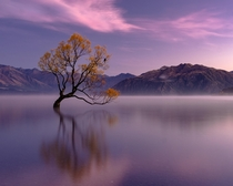 The Wanaka Tree OC