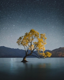 The Wanaka Tree on a clear night New Zealand  Photographer  WithLuke