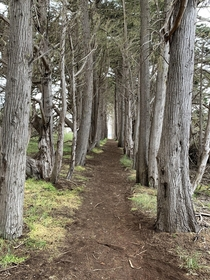 The Way taken by me in San Simeon CA