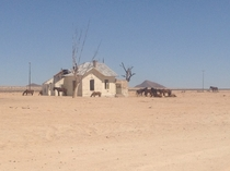 The Wild Desert horses of The Namib at the Abandoned Railway station GurabNamibia