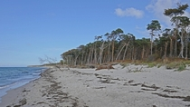 The wildest beach of the calm German Baltic sea coast - West Beach of Darss