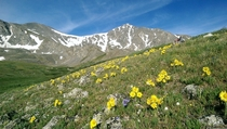 The wildflowers are in full bloom in Colorado