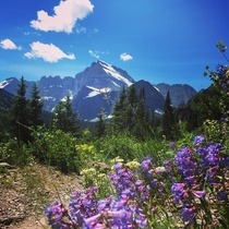 The wildflowers are in full bloom in Glacier National Park