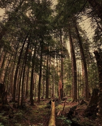 The woods near the Monte Cristo ghost town in northern Washington  x