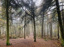 The woods of Bulkeley Hill Cheshire UK