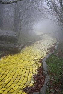 The yellow brick road from the abandoned theme park The Land of Oz in Beech Mountain North Carolina  By unknown