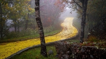The Yellow Brick Road in North Carolinas abandoned Wizard of Oz theme park  by Johnny Joo