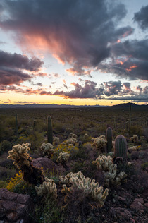 Them Cacti really know how to look pretty in a sunset Tucson AZ IGandrewsantiago_