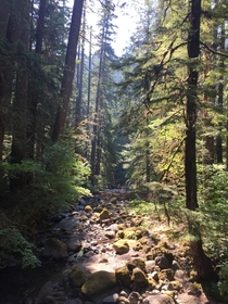 There are no words for how stunning it was to hike through the forests of Washington