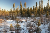 Theres something about our boreal forests this time of year that seems magical to me  Fairbanks Alaska