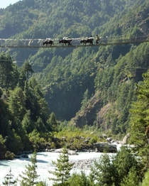 These black dots are yaks crossing a bridge in Nepal near Namche Bazar