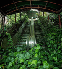 These Escalators Reclaimed By Nature