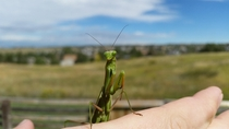 They call me Mantis