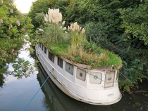 This abandoned boat is used as an garden