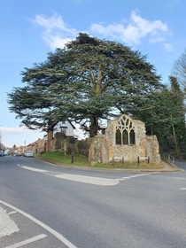 This abandoned church with a large tree growing in it - Suffolk England