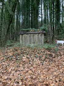 This abandoned outhouse just outside my property