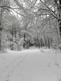 This forest is basically my backyard so beautiful with snow especially since it rarely snows like this around here