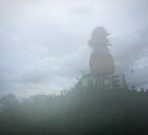 This giant pineapple with osprey nest and large beehive US- just outside Lake Placid FL