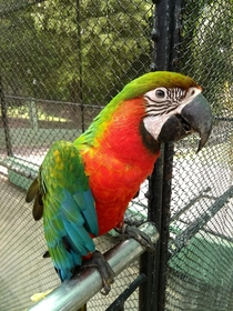This gorgeous Catalina-Macaw