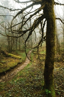This is a great tree Appalachian Trail The Great Smoky Mountains National Park