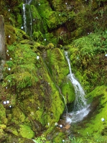 This is a spring that flows year round on my parents property Oregon US