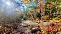 This magical clearing we came across really brings out the fall colors Acadia National Park ME