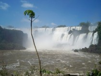 This small tree REALLY loves the Iguazu Falls