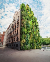 This vertical garden located in Madrid Spain