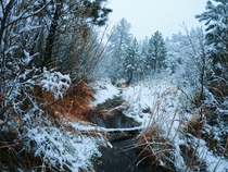 Three days later after a rare snowfall Ive returned to Pine Creek Canyon Las Vegas OC x