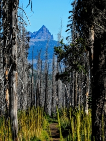 Three Fingered Jack viewed from the Pacific Crest Trail in Oregon