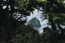 Through the foliage at Cape Kiwanda Natural Scenic Area OR