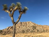 Throwback to my visit at the The Joshua Tree Park last summer It makes me so sad when I see what is happening to the right now