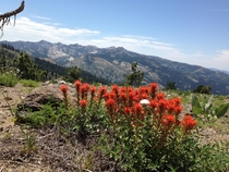Throwback to the summer bloom in the Sierra Nevadas Truckee CA USA