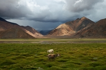 Tibet Landscape China  by rufeng