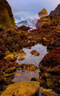Tide Pools in Brookings Oregon