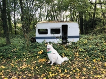 Tiny abandoned caravan in the woods found by my dog