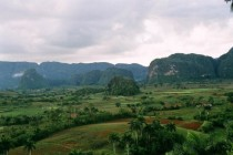 Tobacco Fields in Viales Cuba OC