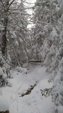 Today on Crawford Path Mount Pierce NH