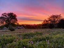 Todays March   sunrise from my backyard in Redding California