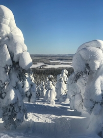 Todays view from Rukatunturi Finland Was - Celsius and sun shining whole day Pleasant day going down the hill  more at norvisions