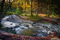 Tollymore forest park Northern Ireland with some autumn light coming through the trees