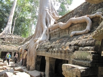 Tomb Raider Temple Ta Prohm Cambodia