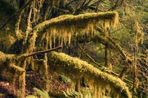 Tongass National Forest nearly  millions acres of lush green in southeast Alaska OC