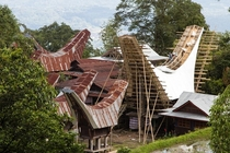 Tongkonan houses of Tana Toraja in Sulawesi Indonesia Although still keeping the basic design most new constructions have abandoned using the intricate bamboo roofs and replaced them with zinc sheets